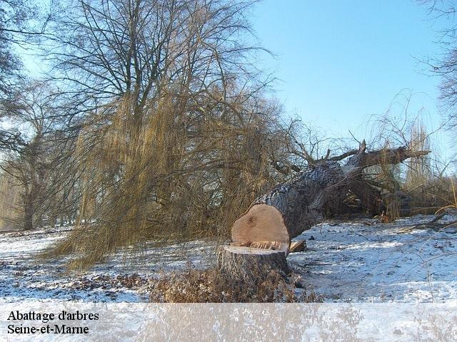 abattage arbre 77. Black Bedroom Furniture Sets. Home Design Ideas
