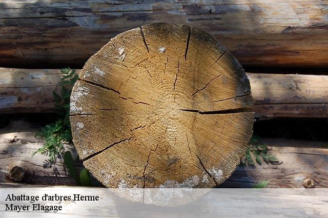 abattage d 39 arbres herme t l. Black Bedroom Furniture Sets. Home Design Ideas
