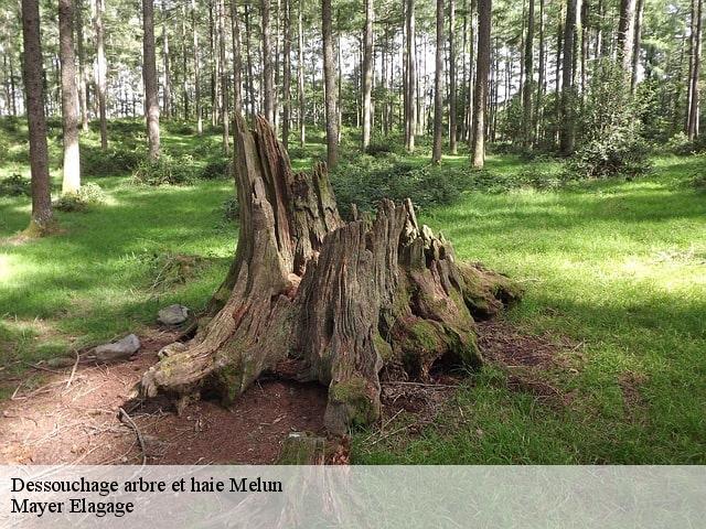elagage arbre melun